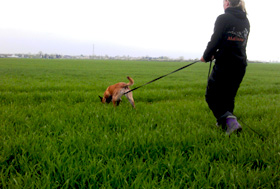 Tracking Dogs